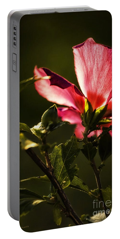 Hibiscus Portable Battery Charger featuring the photograph Hibiscus 03 by Thomas Woolworth