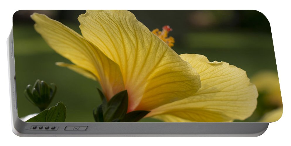 Hibiscus Portable Battery Charger featuring the photograph Hibiscus 'sunny Wind' 3407 by Terri Winkler