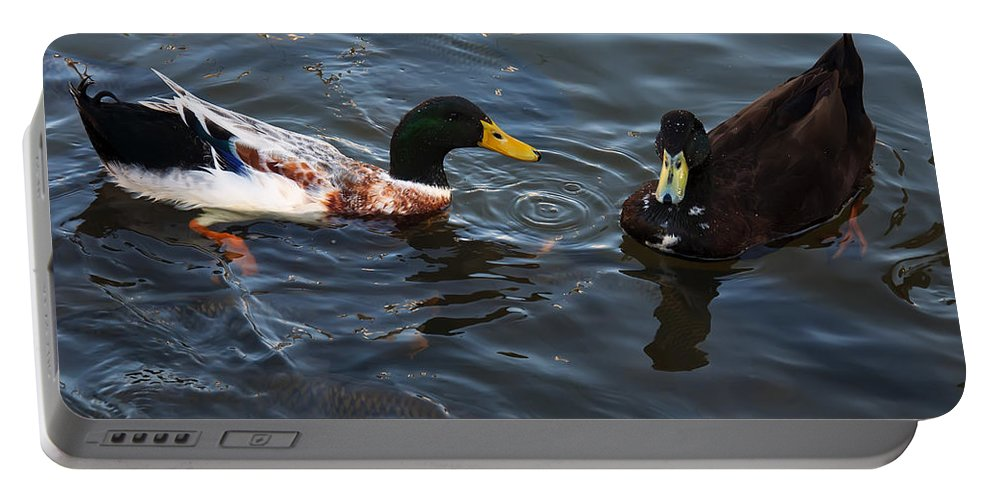 Bird Portable Battery Charger featuring the photograph Hibred Ducks Swimming In Beech Fork Lake by Chris Flees
