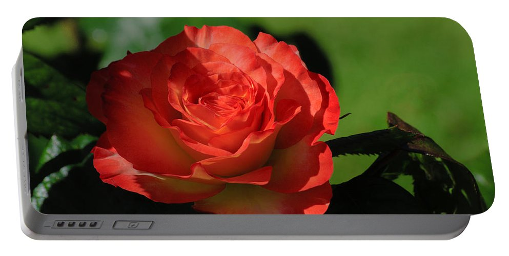 Red Rose Portable Battery Charger featuring the photograph Hidden Beauty by Tikvah's Hope