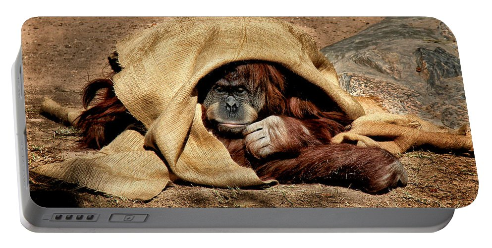 Orangutan Portable Battery Charger featuring the photograph Hiding In Plain Sight by Lucy VanSwearingen