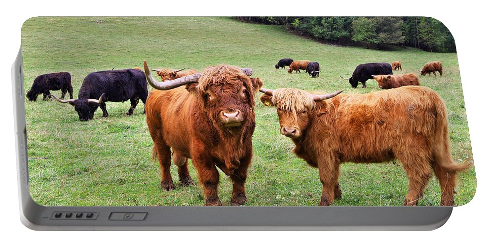 Agrar Portable Battery Charger featuring the photograph Highland Cattle by Ivan Slosar