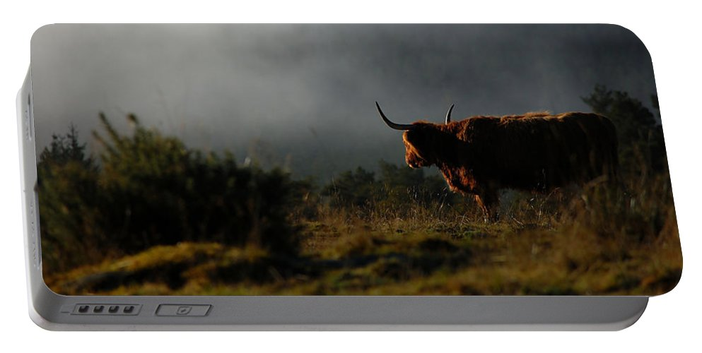 Highland Cow Portable Battery Charger featuring the photograph Highland Cow by Gavin Macrae