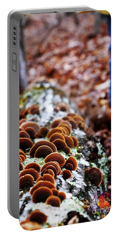 Shelf Portable Battery Charger featuring the photograph Hiking Treasures by Jannice Walker