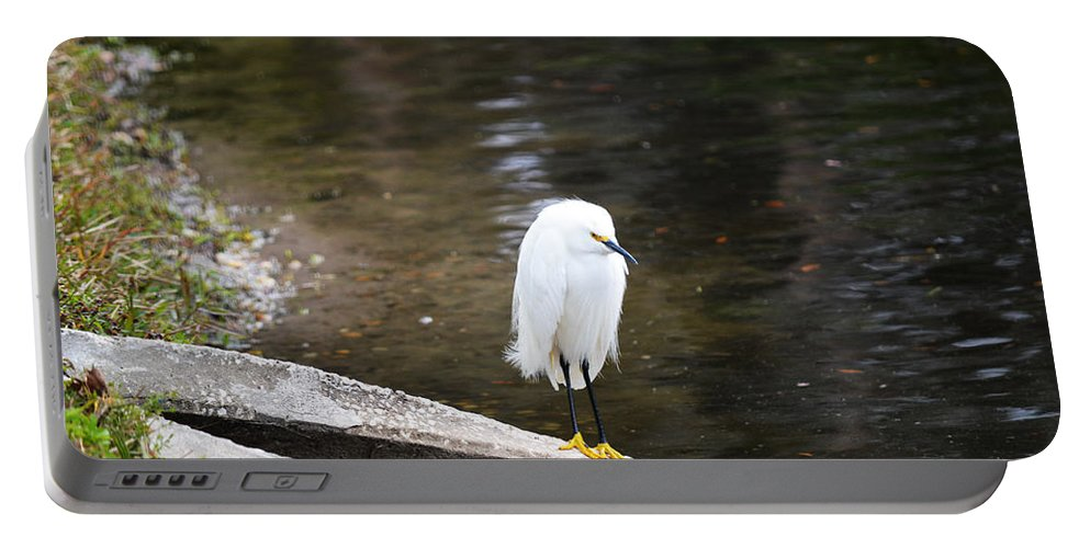 Florida Portable Battery Charger featuring the photograph Hippie Bird by Linda Kerkau
