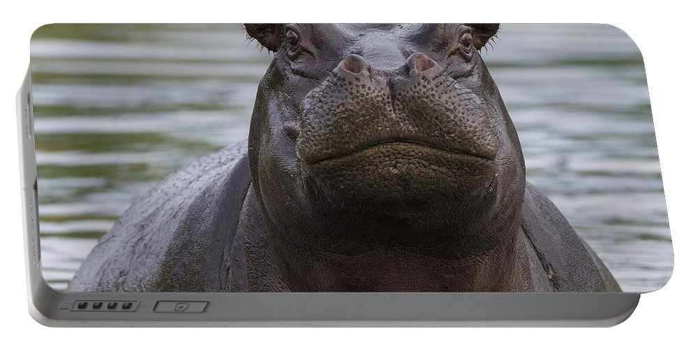 Vincent Grafhorst Portable Battery Charger featuring the photograph Hippopotamus Bull Khwai River Botswana by Vincent Grafhorst