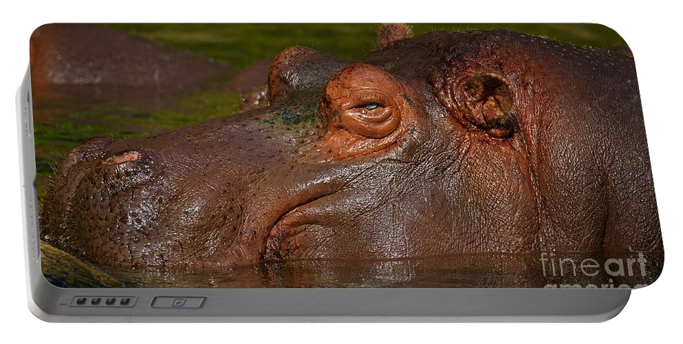 Hippo Portable Battery Charger featuring the photograph Hippopotamus With Its Head Just Above Water by Nick Biemans