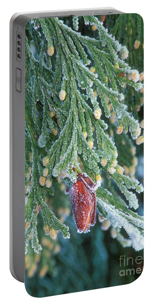 North America Portable Battery Charger featuring the photograph Hoarfrost On Pine Bough Yosemite National Park by Dave Welling