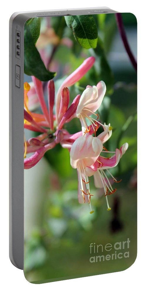 Honeysuckle Portable Battery Charger featuring the photograph Honeysuckle With Keyhole by Renee Croushore