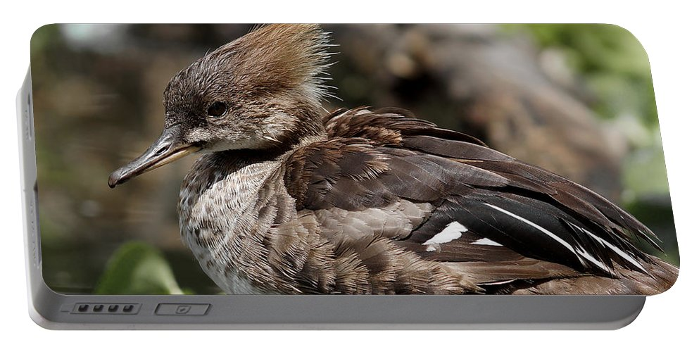 Female Hooded Merganser Portable Battery Charger featuring the photograph Hooded Merganser Female by Ernie Echols