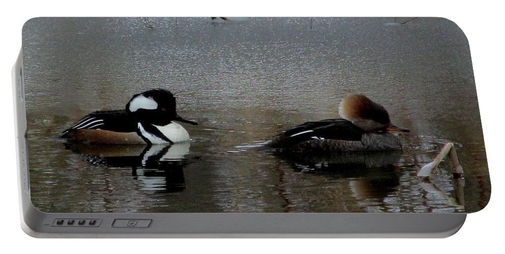 Male And Female Hooded Merganser Mates Chesapeake Bay Water Foul North American Birds Rare Waterfoul Rare Birds Rare Ducks Aquatic Birds Wildlife Refuge Endangered Species Black And White Ducks Crested Ducks Hooded Ducks Water Birds Diving Ducks Diving Birds Chesapeake Biodiversity Winter Birds Cheapest Image License Affordable Image License Budget Image License Lowest Image License Price Cheap Image Licensing Nature Image License Cheap Nature Prints Portable Battery Charger featuring the photograph Hooded Merganser Mates by Joshua Bales
