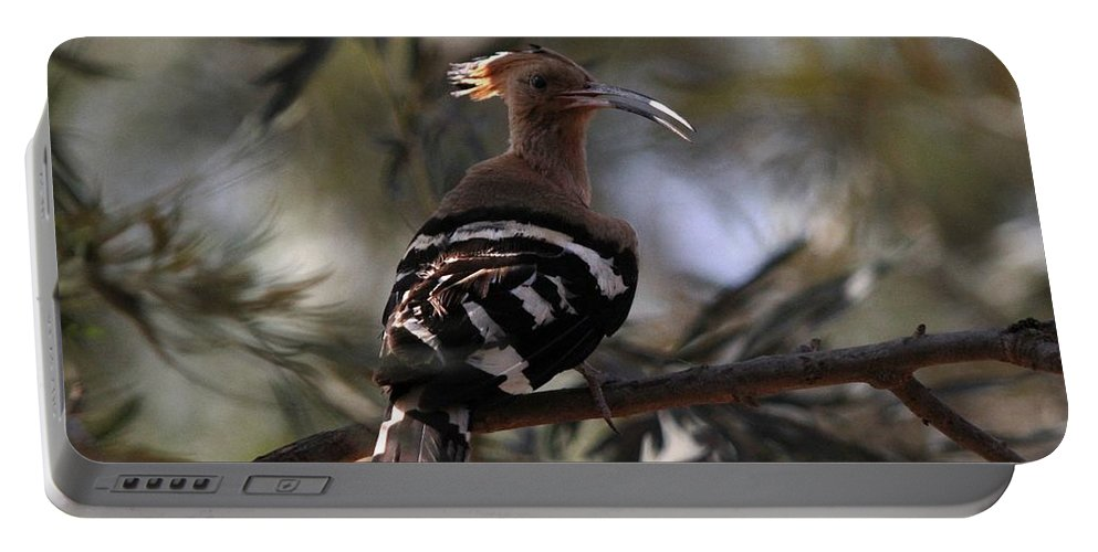 Israel's National Bird. Portable Battery Charger featuring the photograph Hoopoe by Ramabhadran Thirupattur