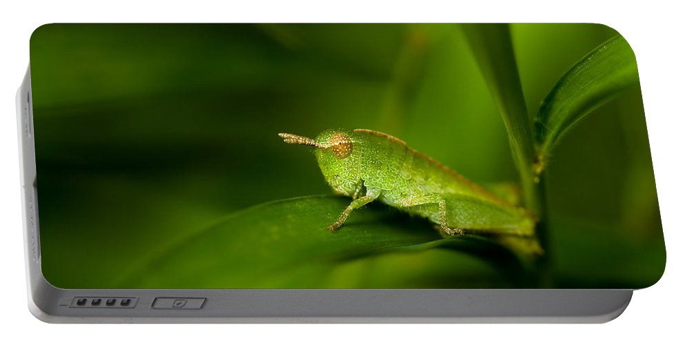 Grasshopper Portable Battery Charger featuring the photograph Hopper by Shane Holsclaw