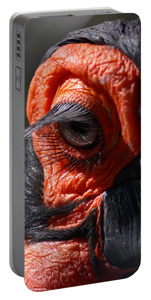 Nature Portable Battery Charger featuring the photograph Hornbill Closeup by David Salter