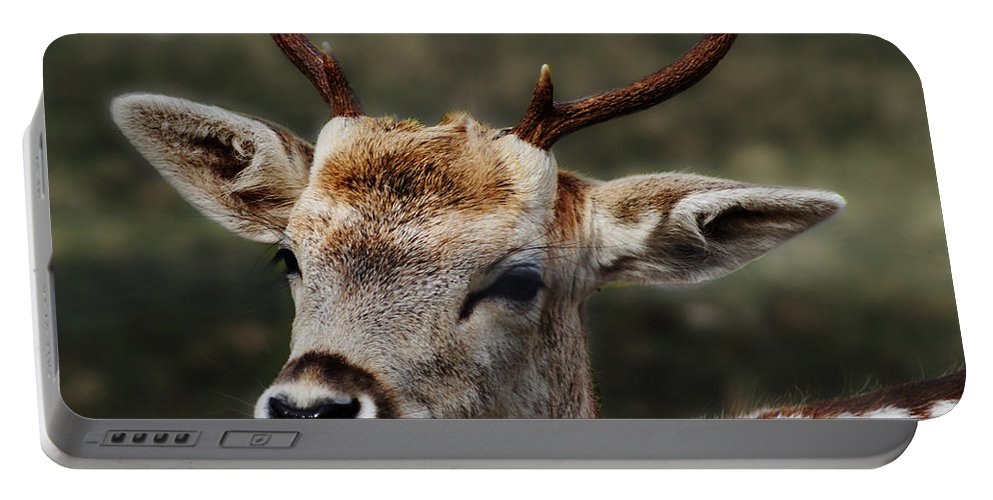 Animals Portable Battery Charger featuring the photograph Hornes 2 by Ben Yassa