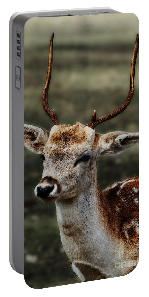 Animals Portable Battery Charger featuring the photograph Hornes by Ben Yassa