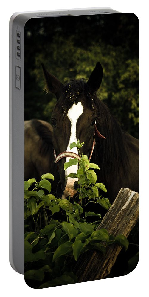 Horse Portable Battery Charger featuring the photograph Horse Fence by Shane Holsclaw