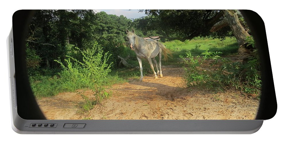 Horse Portable Battery Charger featuring the photograph Horse Walks Toward Camera by Aaron Martens