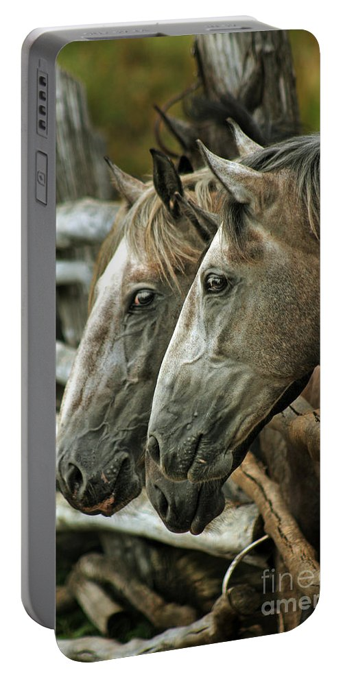 Horse Portable Battery Charger featuring the photograph Horses Looking Through The Fence by Angel Ciesniarska