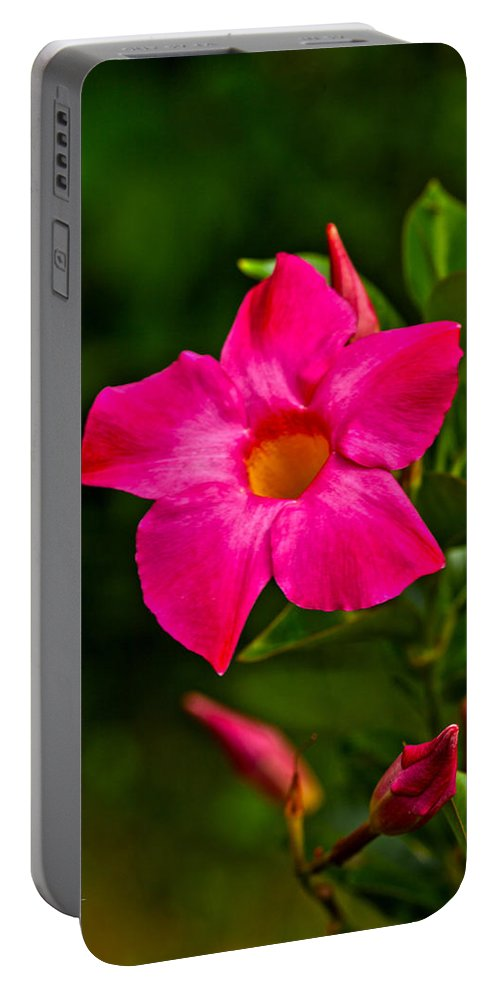 Dipladenia Portable Battery Charger featuring the photograph Hot Pink Dipladenia by Karol Livote