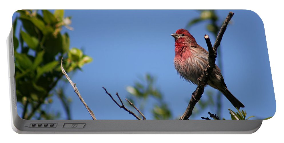 Bird Portable Battery Charger featuring the photograph House Finch by Allan Lovell