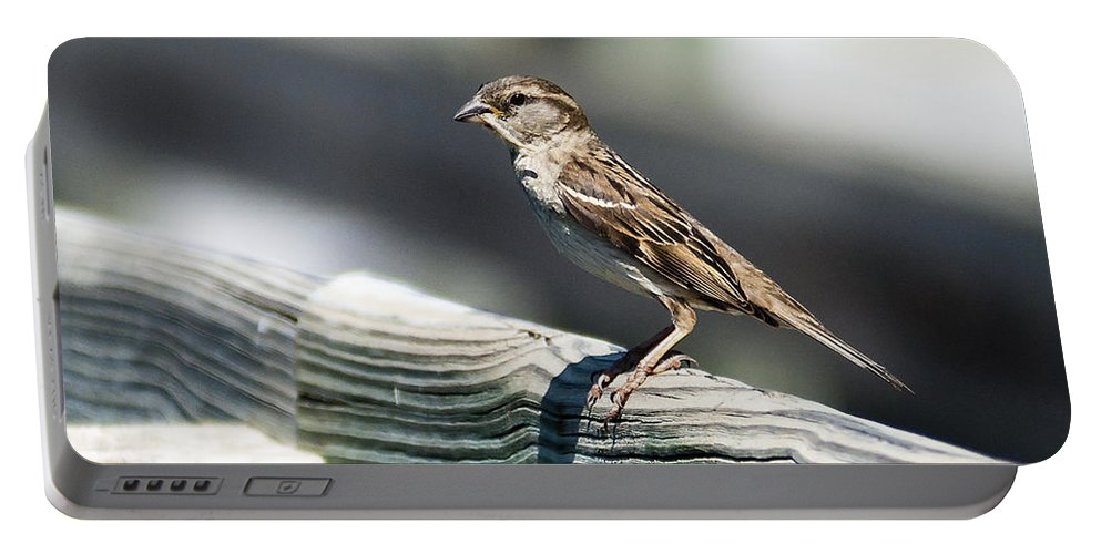 Heron Heaven Portable Battery Charger featuring the photograph House Sparrow by Edward Peterson