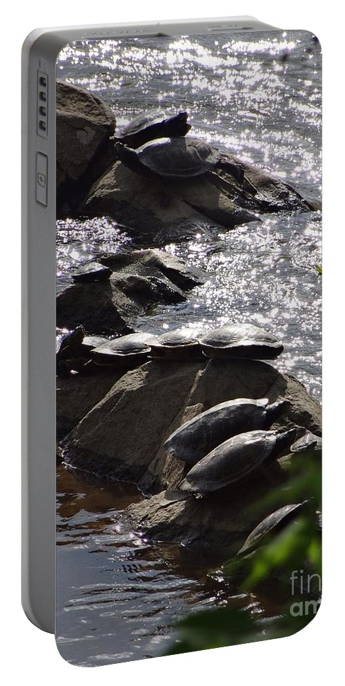 Turtles Portable Battery Charger featuring the photograph How Many Turtles by Christopher Plummer