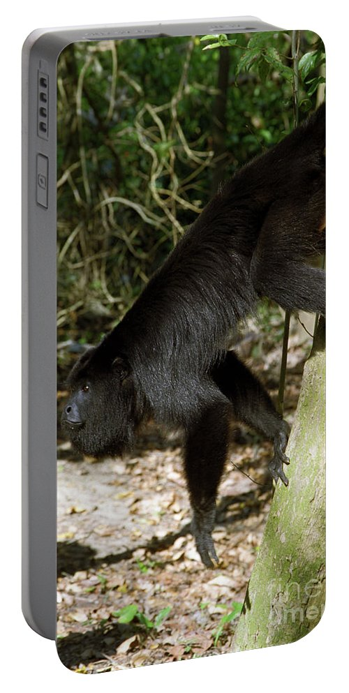 Animals Portable Battery Charger featuring the photograph Howler Monkey by Kathy McClure