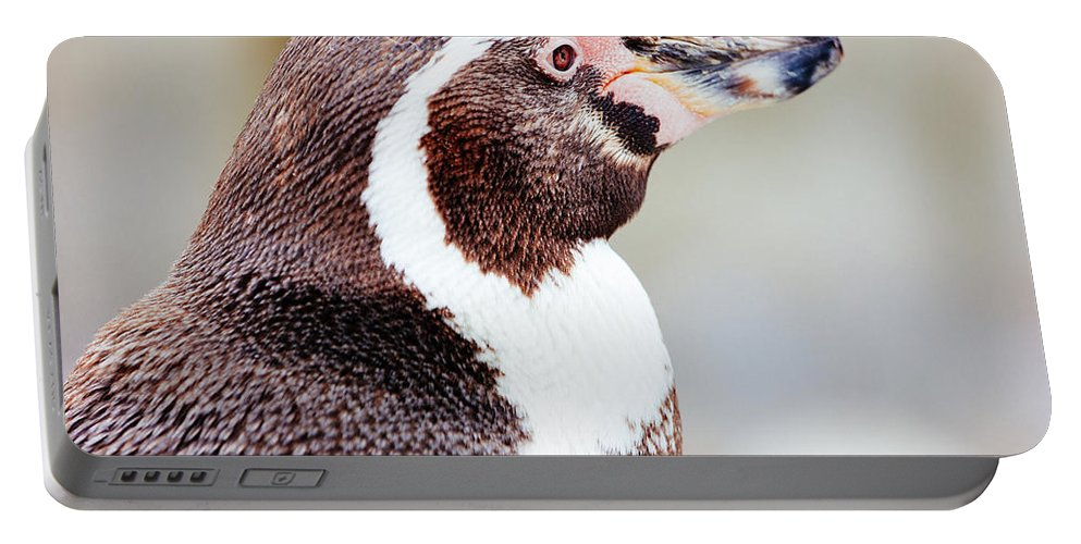 Closeup Portable Battery Charger featuring the photograph Humboldt Penguin Portrait by Pati Photography