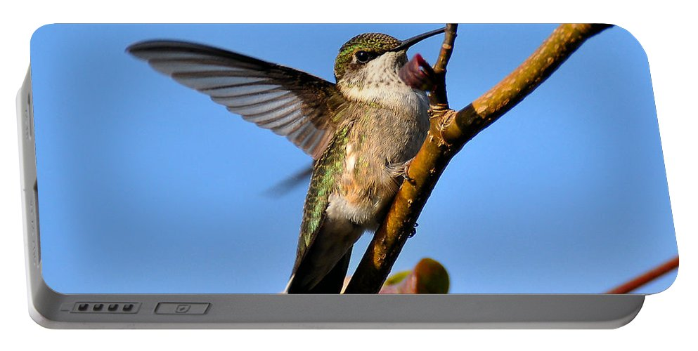 Humming Bird Portable Battery Charger featuring the photograph Hummer by Todd Hostetter