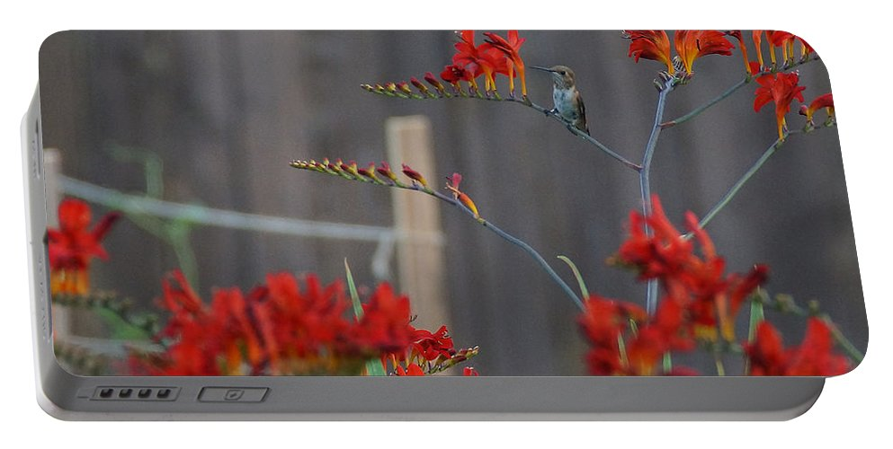 Hummingbird Portable Battery Charger featuring the photograph Hummingbird At Rest by Mick Anderson