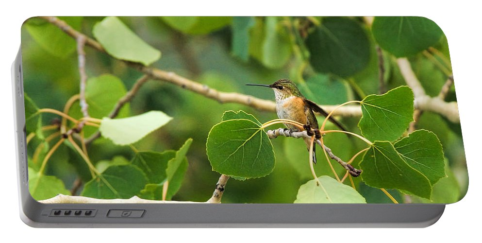 Hummingbird Portable Battery Charger featuring the photograph Hummingbird In Tree by Alan Hutchins