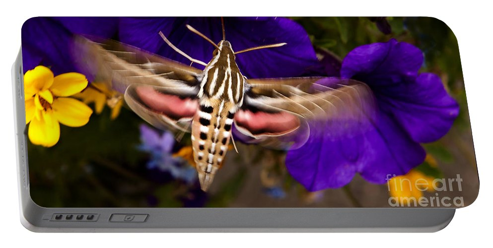 Moth Portable Battery Charger featuring the photograph Hummingbird Moth  #8612 by J L Woody Wooden