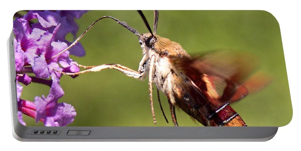 Hummingbird Moth Portable Battery Charger featuring the photograph Hummingbird Moth by Barbara McMahon