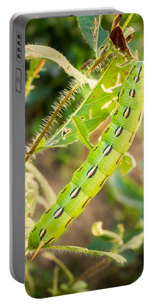 Caterpillar Portable Battery Charger featuring the photograph Hummingbird Moth Caterpillar by Bill Pevlor