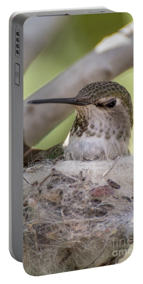 Hummingbird Nest Portable Battery Charger featuring the photograph Hummingbird Nest by Larry White