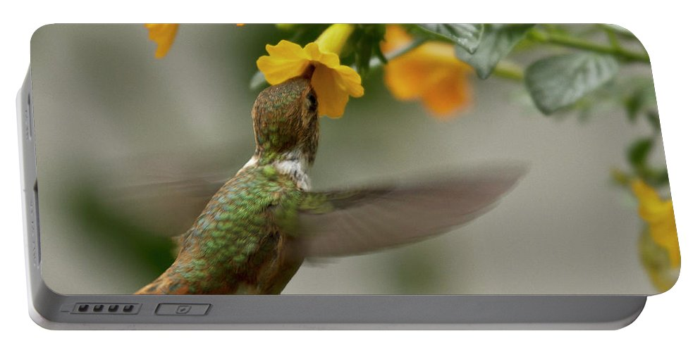 Bird Portable Battery Charger featuring the photograph Hummingbird Sips Nectar by Heiko Koehrer-Wagner
