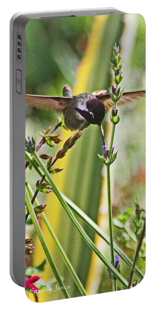 Hummingbird With Blue Throat Portable Battery Charger featuring the photograph Hummingbird With Blue Throat by Tom Janca