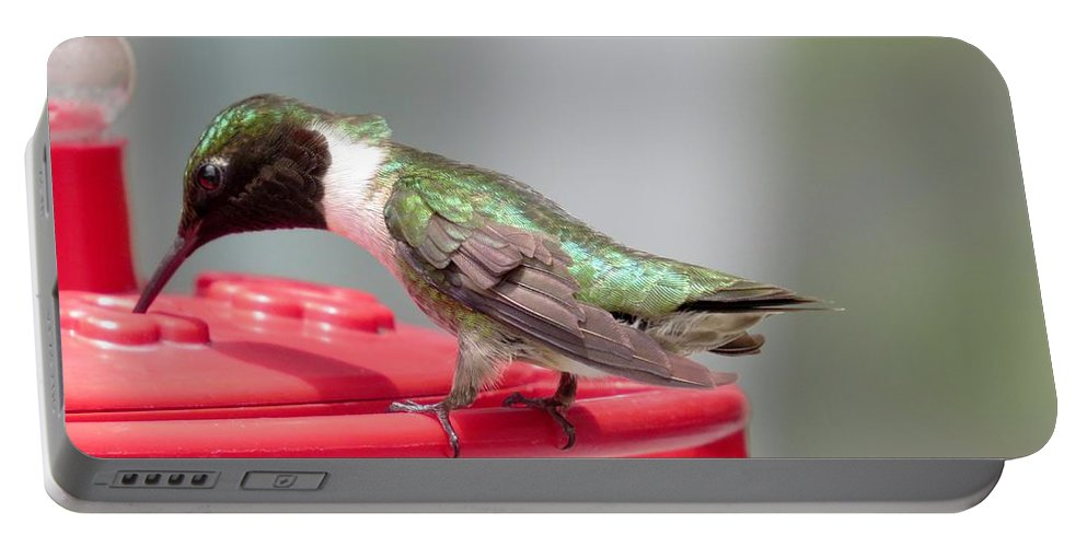 Hummingbird Portable Battery Charger featuring the photograph Hummingbird by Zina Stromberg