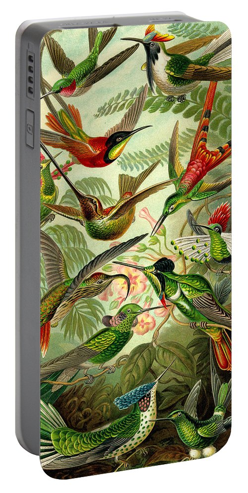 Hummingbirds Portable Battery Charger featuring the digital art Hummingbirds by Unknown