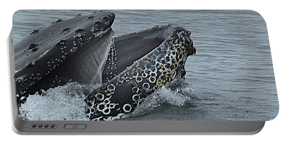 Whales Portable Battery Charger featuring the photograph Humpback Whale Lunge Feeding 2013 In Monterey Bay by California Views Mr Pat Hathaway Archives