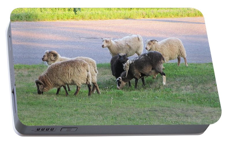 Sheep Portable Battery Charger featuring the painting Hungry In Life by Robert Nacke