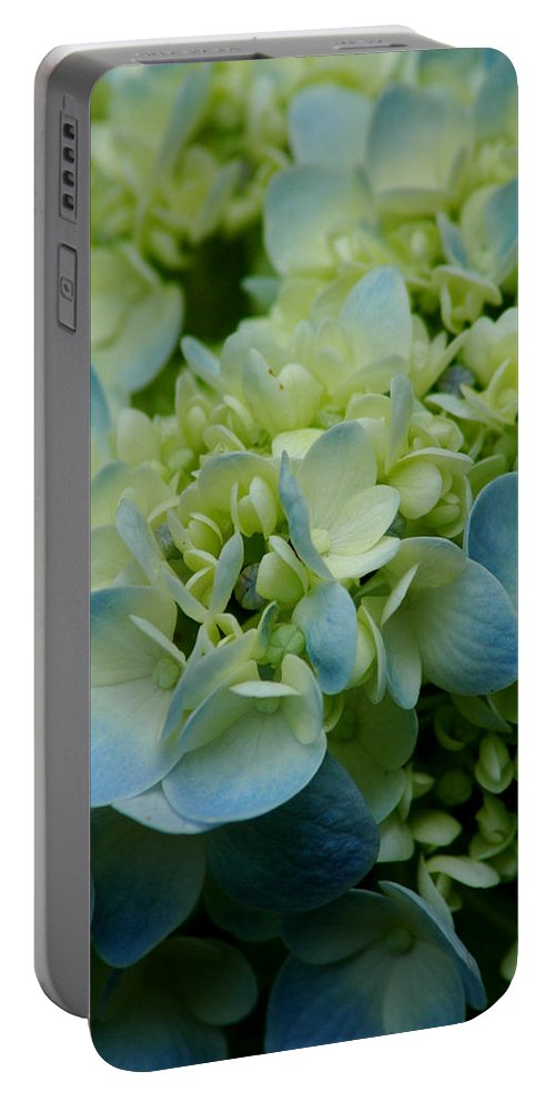 Flower Portable Battery Charger featuring the photograph Hydrangea 2 by David Weeks