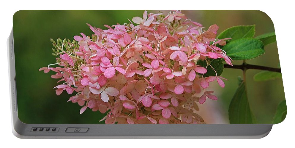 Minimal Portable Battery Charger featuring the photograph Hydrangea Valentine by Michael Saunders