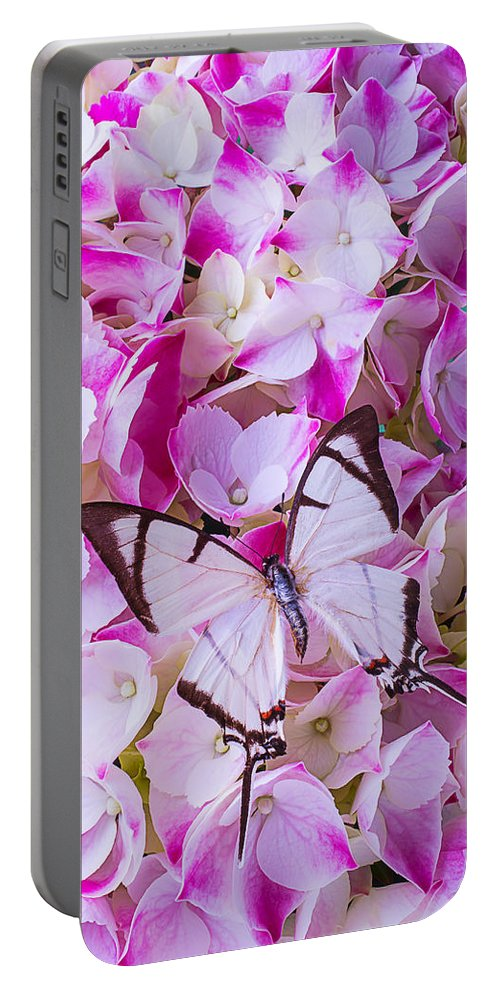 White Portable Battery Charger featuring the photograph Hydrangea With Bright White Butterfly by Garry Gay