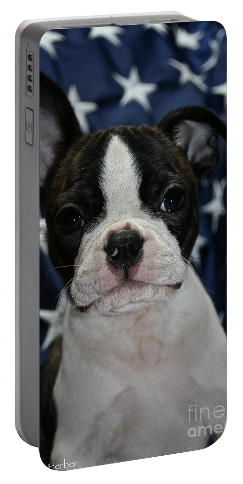 Pet Portable Battery Charger featuring the photograph I Am A Star by Susan Herber