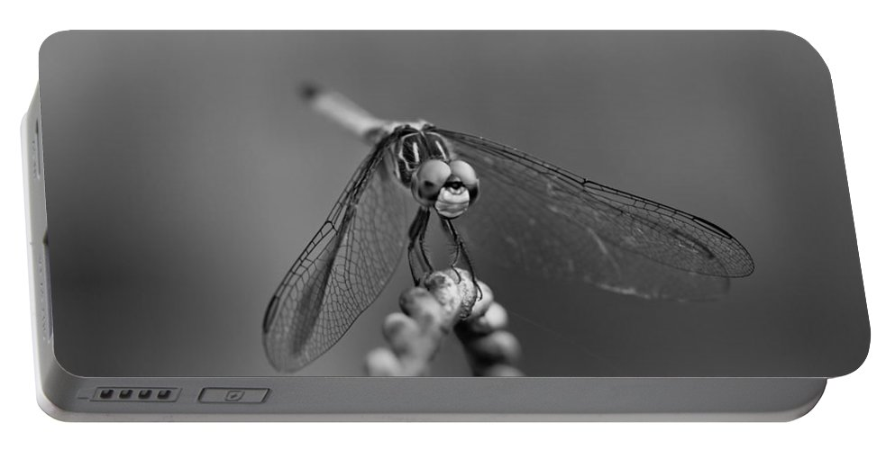 Dragon Fly Portable Battery Charger featuring the photograph I Come In Peace by Kim Henderson