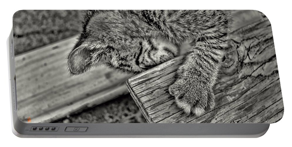 Kitten Portable Battery Charger featuring the photograph I Got You Now by Adam Vance