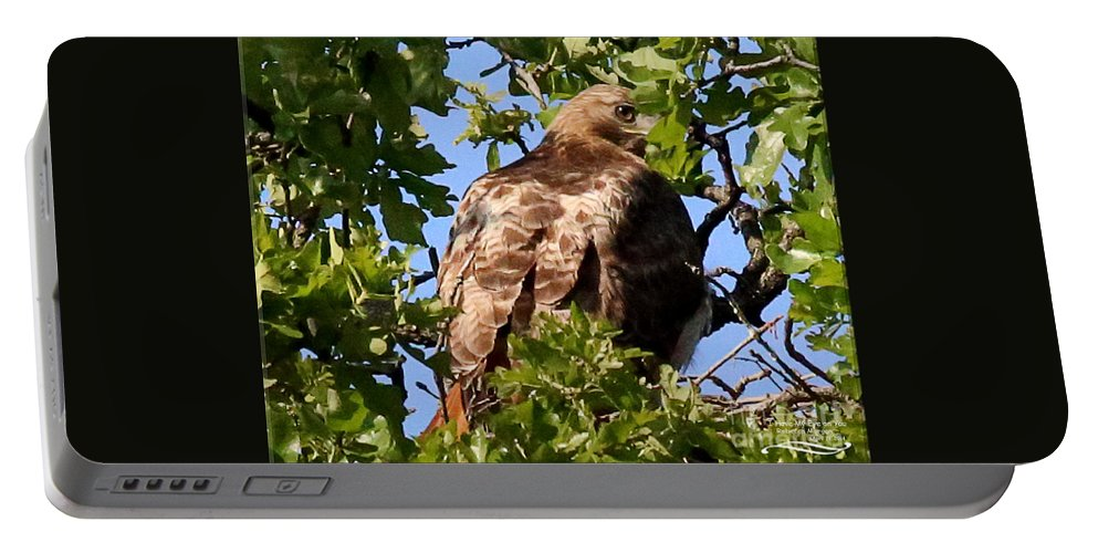 Hawk Portable Battery Charger featuring the photograph I Have My Eye On You by Rebecca Morgan