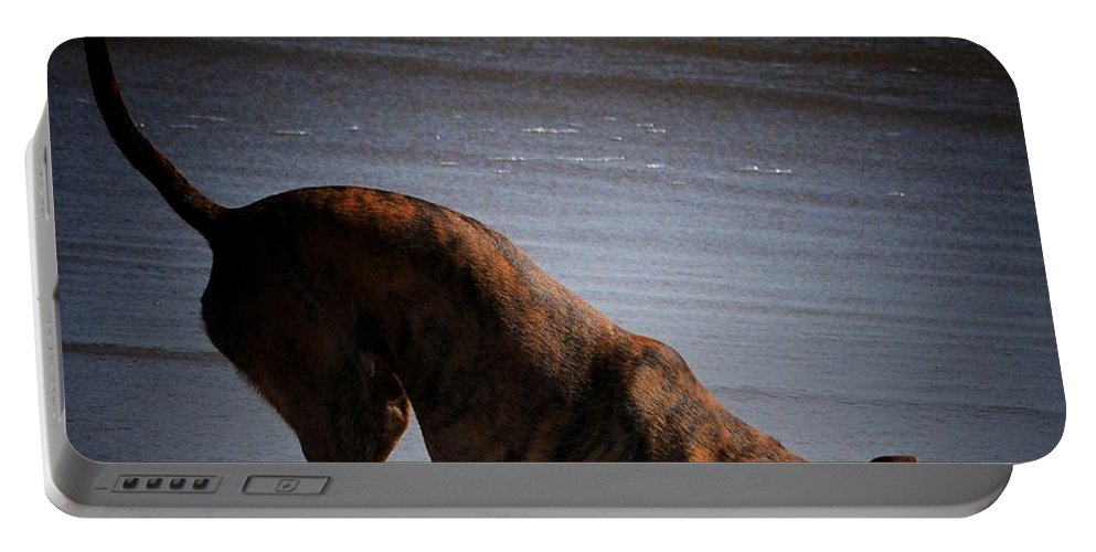 Dogs Portable Battery Charger featuring the photograph I Hear Sumpin by Robert McCubbin